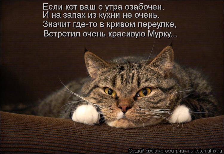Котоматрица: И на запах из кухни не очень. Если кот ваш с утра озабочен. Значит где-то в кривом переулке, Встретил очень красивую Мурку...