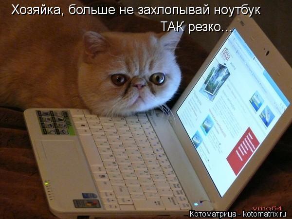 Котоматрица: Хозяйка, больше не захлопывай ноутбук ТАК резко...