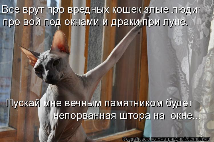 Котоматрица: Все врут про вредных кошек злые люди: про вой под окнами и драки при луне. Пускай мне вечным памятником будет непорванная штора на  окне...