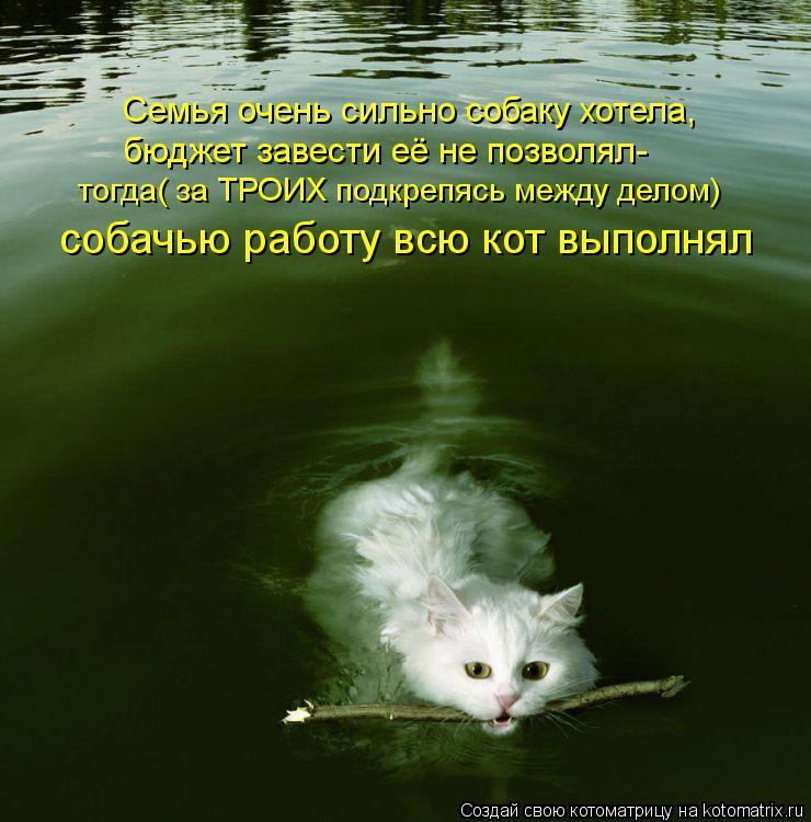Котоматрица: Семья очень сильно собаку хотела, бюджет завести её не позволял- тогда( за ТРОИХ подкрепясь между делом) собачью работу всю кот выполнял