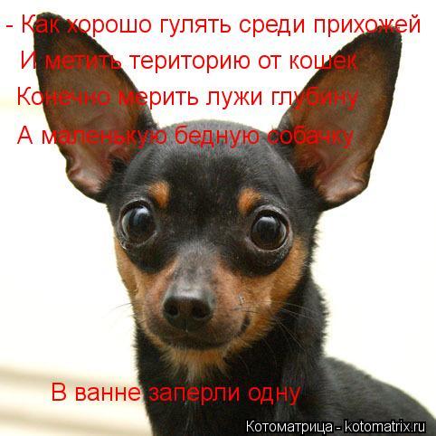 Котоматрица: - Как хорошо гулять среди прихожей И метить територию от кошек Конечно мерить лужи глубину А маленькую бедную собачку В ванне заперли одну