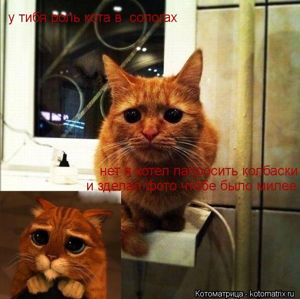 Котоматрица: у тибя роль кота в  сопогах нет я хотел папросить колбаски и зделал фото чтобе было милее