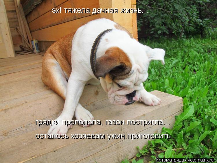 http://kotomatrix.ru/images/lolz/2012/06/21/kotomatritsa_P1.jpg