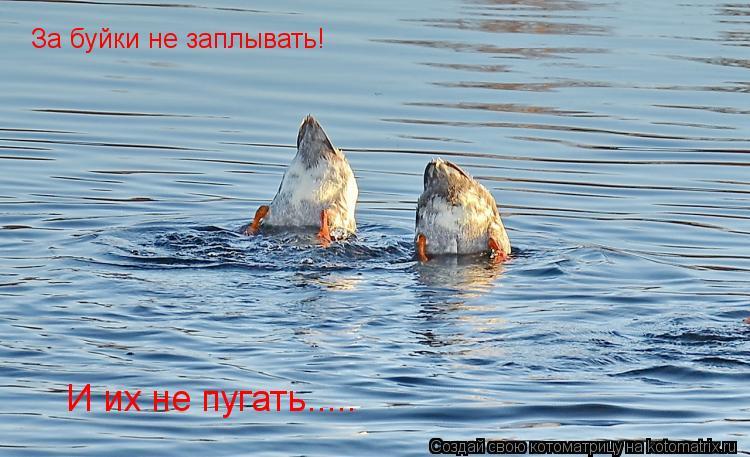 Котоматрица: За буйки не заплывать! И их не пугать.....