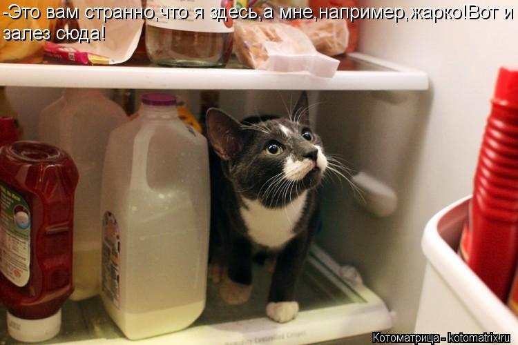 Котоматрица: -Это вам странно,что я здесь,а мне,например,жарко!Вот и залез сюда!