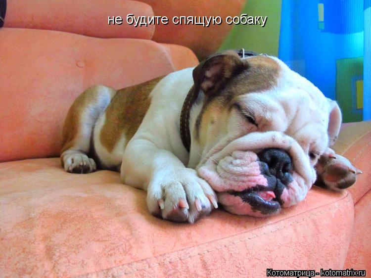 Котоматрица: не будите спящую собаку