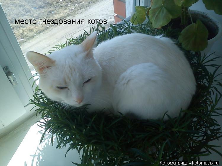 Котоматрица: место гнездования котов