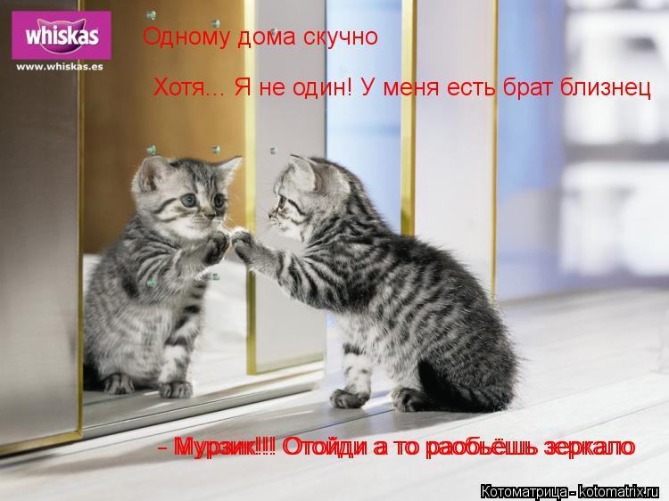Котоматрица: Одному дома скучно Хотя... Я не один! У меня есть брат близнец - Мурзик!!! Отойди а то раобьёшь зеркало - Мурзик!!! Отойди а то раобьёшь зеркало