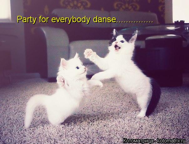 Котоматрица: Party for everybody danse...............