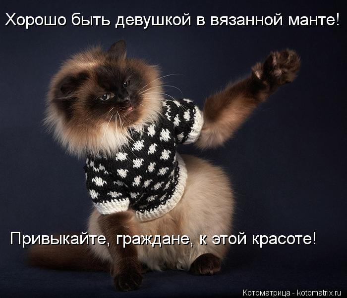 Котоматрица: Хорошо быть девушкой в вязанной манте! Привыкайте, граждане, к этой красоте!