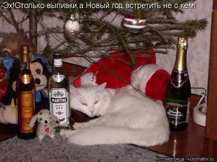 Котоматрица: -Эх!Столько выпивки,а Новый год встретить не с кем!