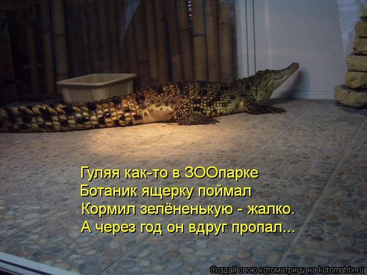Котоматрица: Гуляя как-то в ЗООпарке Ботаник ящерку поймал Кормил зелёненькую - жалко. А через год он вдруг пропал...