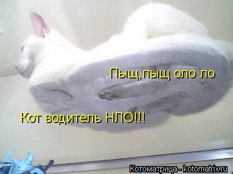 Котоматрица: Пыщ,пыщ оло ло Кот водитель НЛО!!!