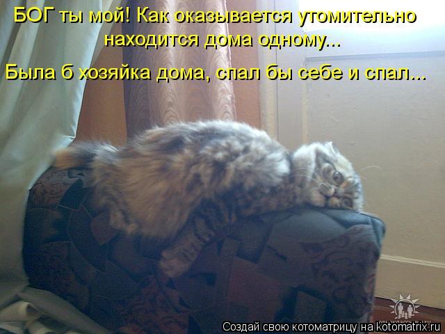 Котоматрица: БОГ ты мой! Как оказывается утомительно  находится дома одному...  Была б хозяйка дома, спал бы себе и спал...