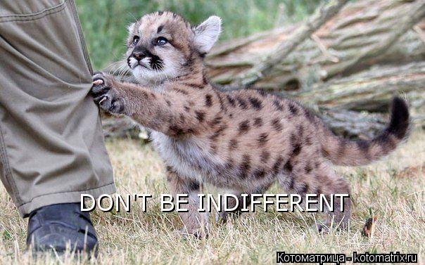 Котоматрица: DON'T BE INDIFFERENT