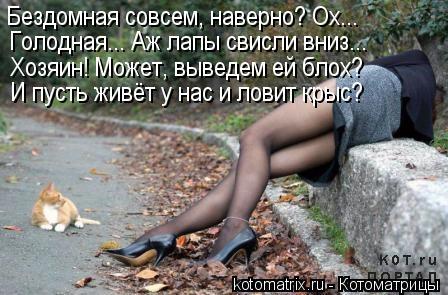 Котоматрица: Бездомная совсем, наверно? Ох... Голодная... Аж лапы свисли вниз... Хозяин! Может, выведем ей блох? И пусть живёт у нас и ловит крыс?