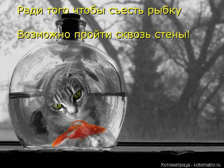 Котоматрица: Ради того чтобы съесть рыбку Возможно пройти сквозь Возможно пройти сквозь стены!