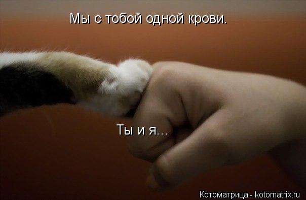 Котоматрица: Мы с тобой одной крови. Ты и я...