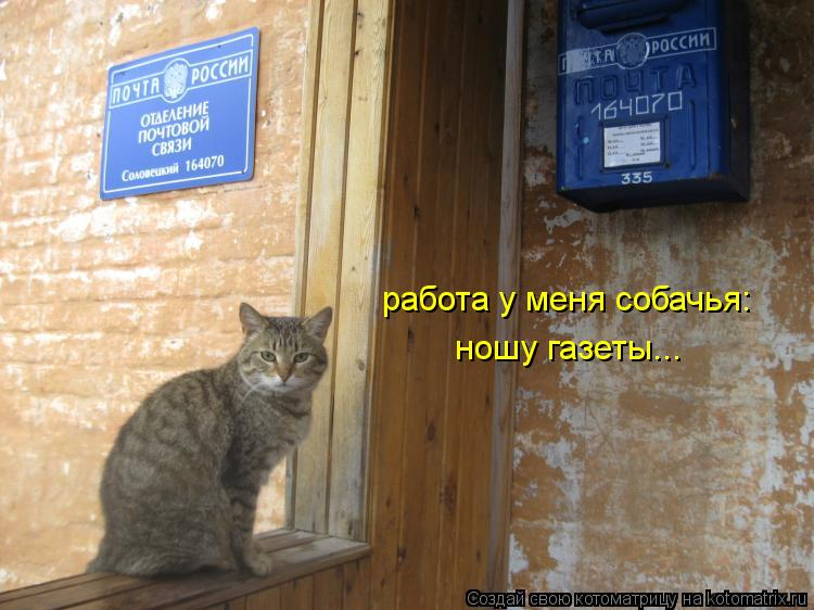 Котоматрица: работа у меня собачья: ношу газеты...