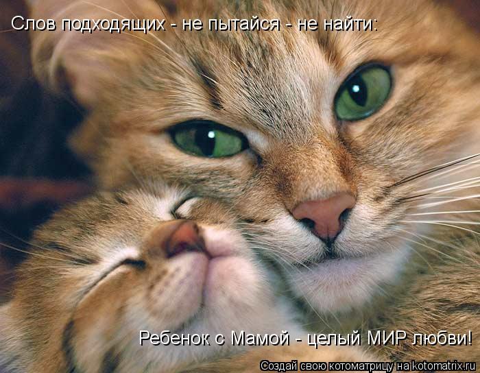 Котоматрица: Слов подходящих - не пытайся - не найти: Ребенок с Мамой - целый МИР любви!