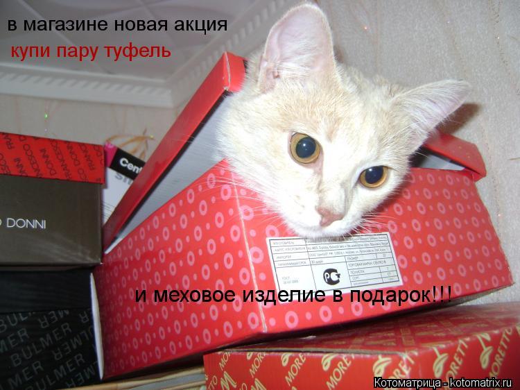 Котоматрица: в магазине новая акция  купи пару туфель  и меховое изделие в подарок!!!