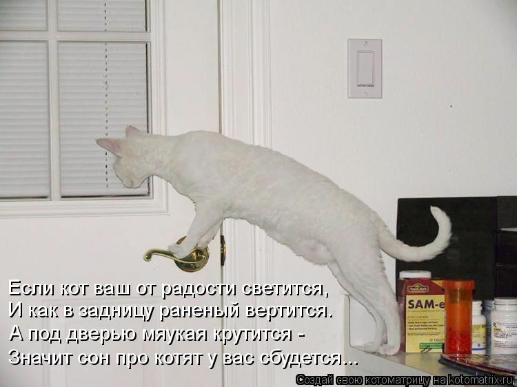Котоматрица: Если кот ваш от радости светится, И как в задницу раненый вертится. А под дверью мяукая крутится -  Значит сон про котят у вас сбудется...