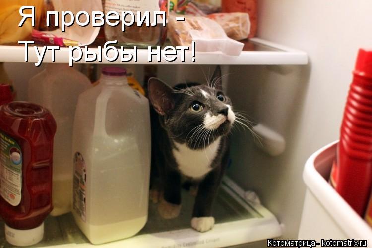 Котоматрица: Я проверил - Тут рыбы нет!