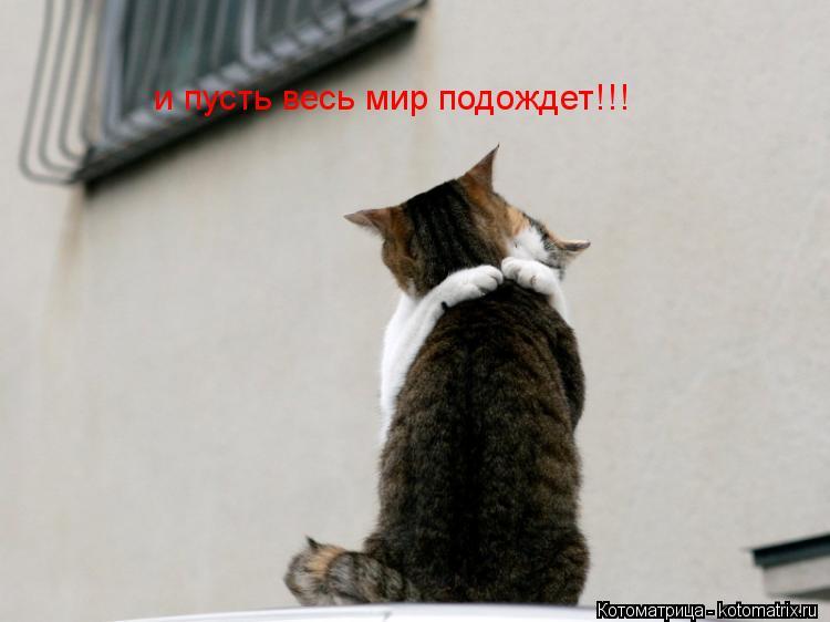 Котоматрица: и пусть весь мир подождет!!!