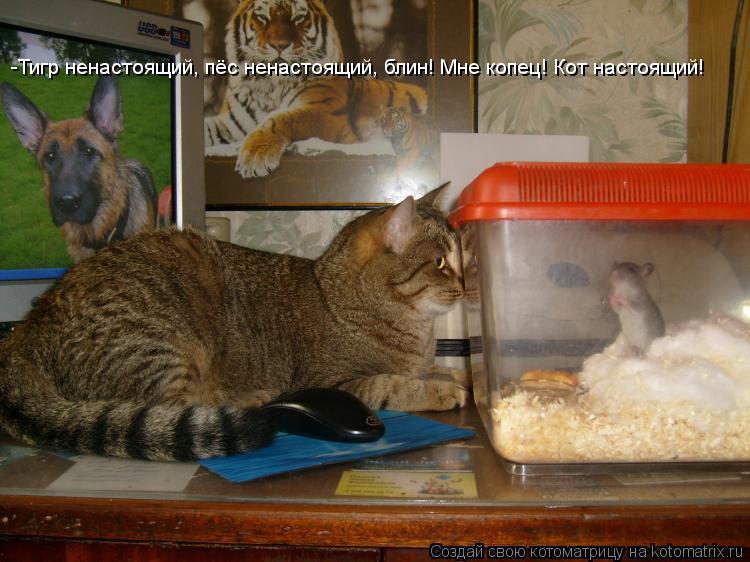 Котоматрица: -Тигр ненастоящий, пёс ненастоящий, блин! Мне копец! Кот настоящий!