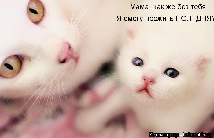 Котоматрица: Мама, как же без тебя Я смогу прожить ПОЛ- ДНЯ???