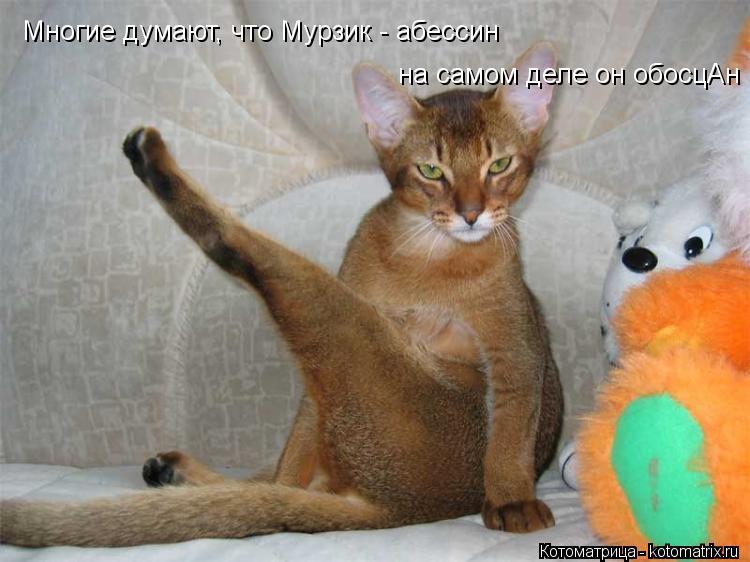 Котоматрица: Многие думают, что Мурзик - абессин на самом деле он обосцАн