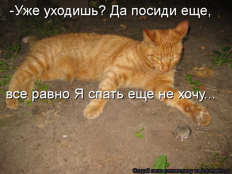 Котоматрица: -Уже уходишь? Да посиди еще, все равно Я спать еще не хочу...