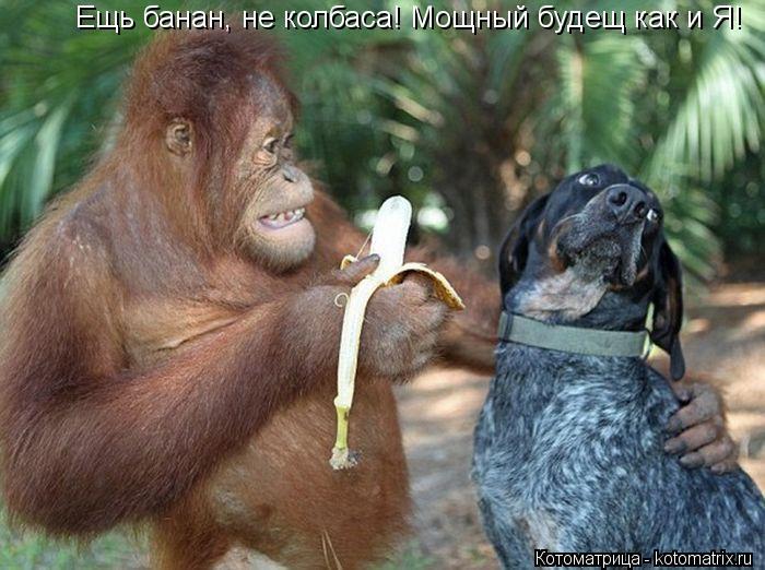 Котоматрица: Ещь банан, не колбаса мощный будещ как и Я! Ещь банан, не колбаса! Мощный будещ как и Я!