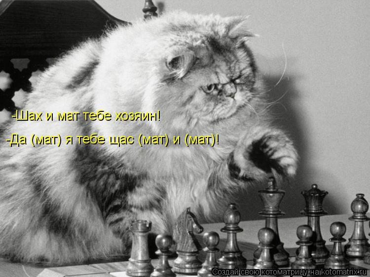 Котоматрица: -Шах и мат тебе хозяин! -Да (мат) я тебе щас (мат) и (мат)!