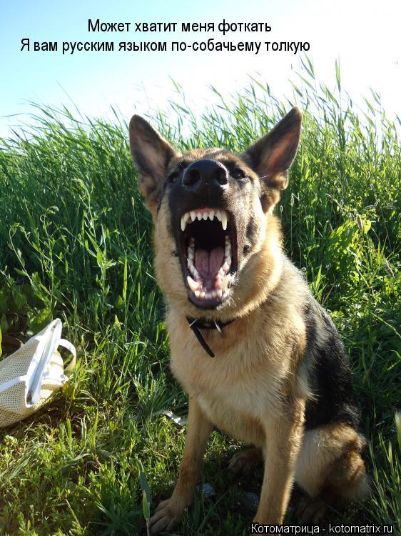 Котоматрица: Может хватит меня фоткать Я вам русским языком по-собачьему толкую