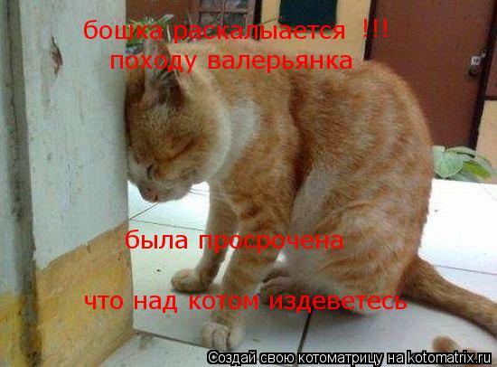 Котоматрица: бошка раскалыается !!! походу валерьянка была просрочена что над котом издеветесь