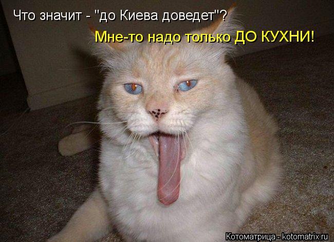 """Котоматрица: Что значит - """"до Киева доведет""""? Мне-то надо только ДО КУХНИ!"""
