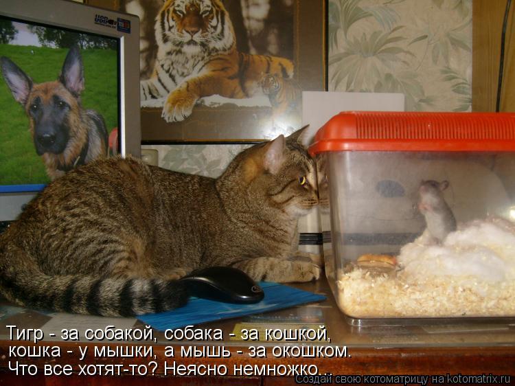 Котоматрица: Тигр - за собакой, собака - за кошкой, кошка - у мышки, а мышь - за окошком. Что все хотят-то? Неясно немножко...