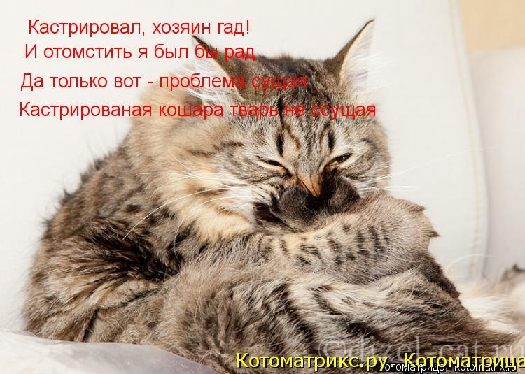 Котоматрица: Кастрировал, хозяин гад! И отомстить я был бы рад Да только вот - проблема сущая Кастрированая кошара тварь не ссущая Котоматрикс.ру. Котома