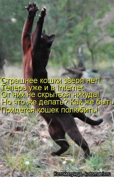 Котоматрица: Но что же делать? Как же быть? От них не скрыться никуда! Теперь уже и в Internet Страшнее кошки зверя нет! Придется кошек полюбить!