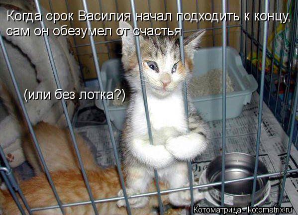 Котоматрица: Когда срок Василия начал подходить к концу, сам он обезумел от счастья (или без лотка?)
