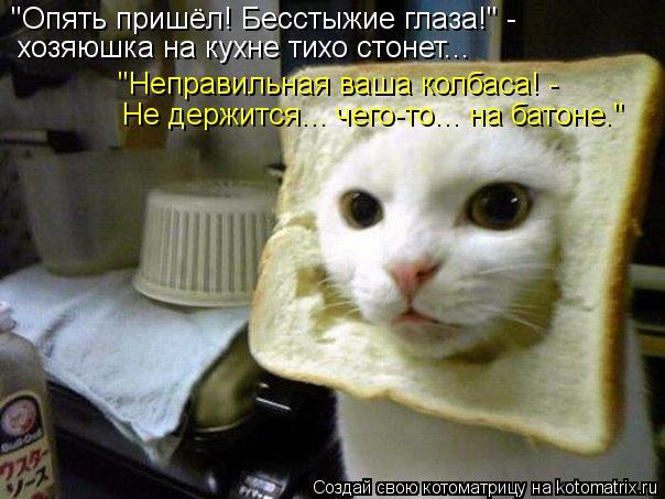 """Котоматрица: """"Опять пришёл! Бесстыжие глаза!"""" - хозяюшка на кухне тихо стонет... """"Неправильная ваша колбаса! - Не держится... чего-то... на батоне."""""""