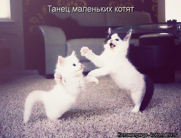 Котоматрица: Танец маленьких котят