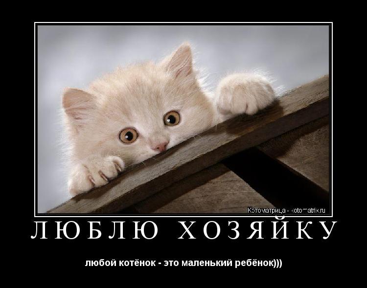 Котоматрица: ЛЮБЛЮ ХОЗЯЙКУ любой котёнок - это маленький ребёнок)))