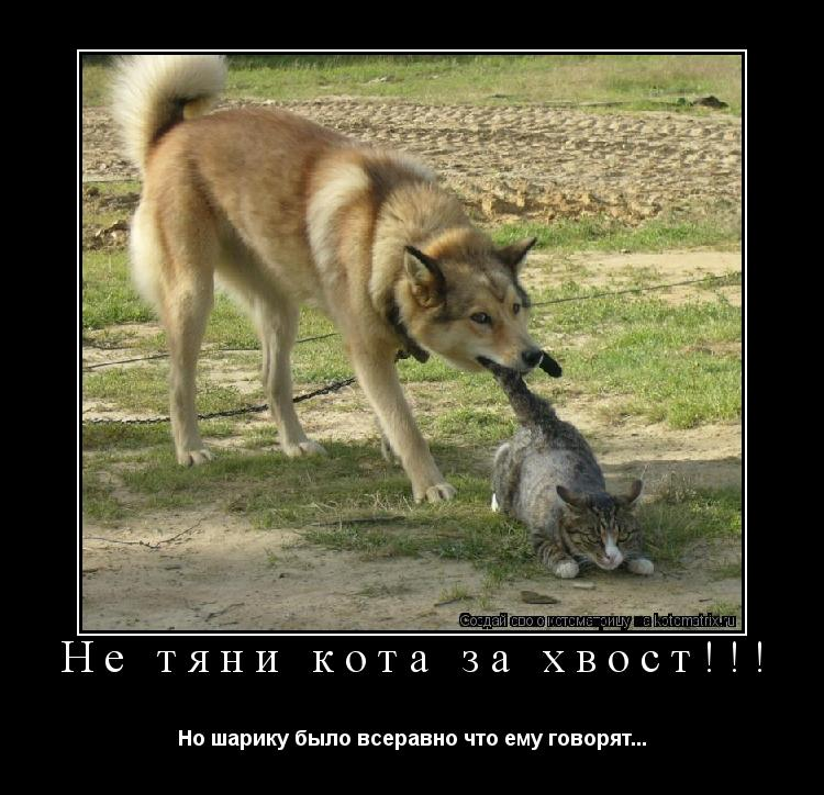 Котоматрица: Не тяни кота за хвост!!! Но шарику было всеравно что ему говорят...