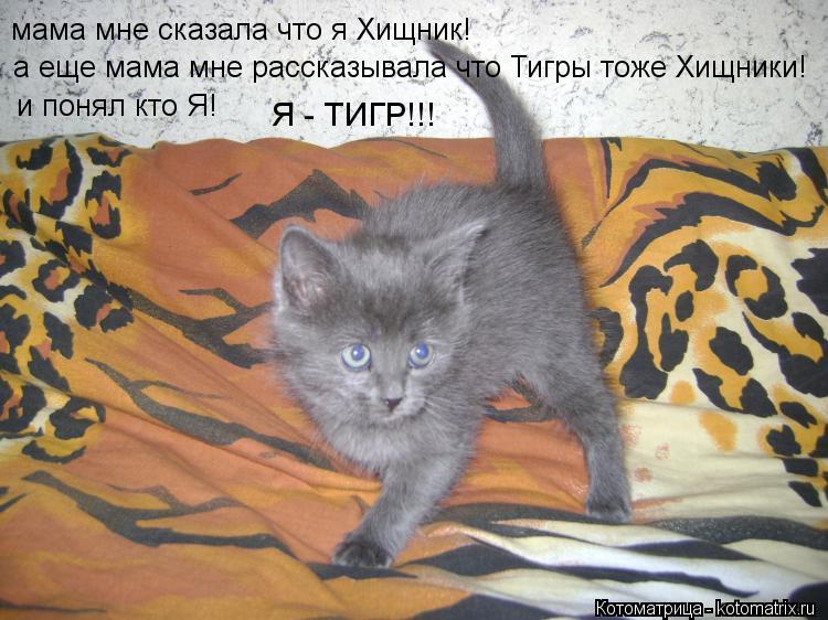 Котоматрица: мама мне сказала что я Хищник! и понял кто Я! а еще мама мне рассказывала что Тигры тоже Хищники! Я - ТИГР!!!