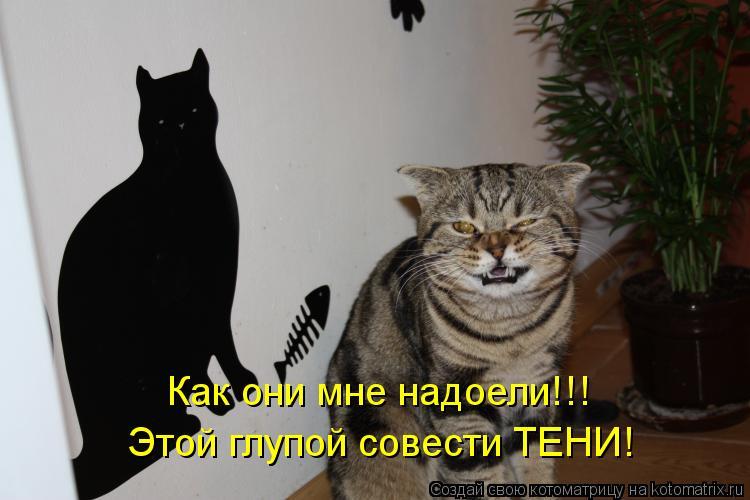 Котоматрица: Как они мне надоели!!! Этой глупой совести ТЕНИ!