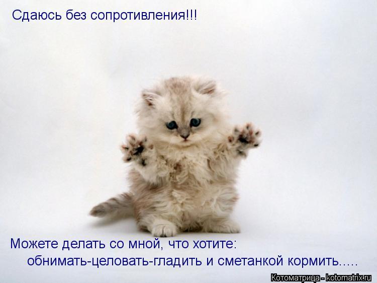 Котоматрица: Сдаюсь без сопротивления!!! Можете делать со мной, что хотите: обнимать-целовать-гладить и сметанкой кормить.....