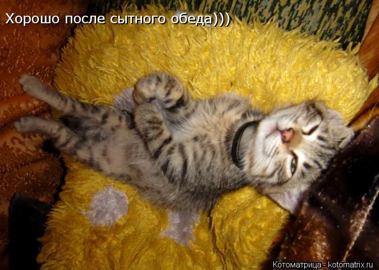 Котоматрица: Хорошо после сытного обеда)))