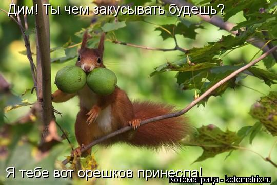Котоматрица: Дим! Ты чем закусывать будешь? Я тебе вот орешков принесла!